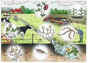 systeem Bodem - Boer - Biodiversiteit